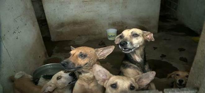 Moradores denunciam abandono de cães em imóveis na Zona Norte de Recife, PE