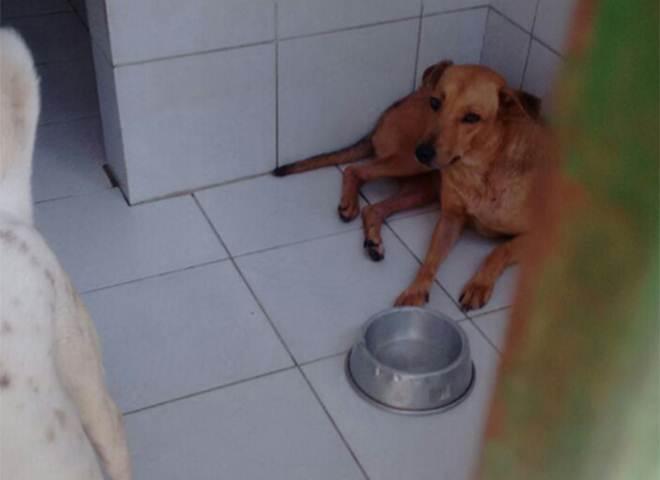Apipa pede ajuda para manter animais em abrigo por falta de recursos