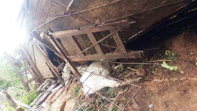 Caminhão carregado de gado tomba e animais morrem na rodovia PI-112