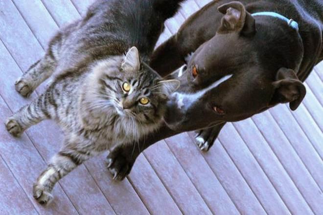 FMS oferece castração gratuita para cães e gatos em Teresina, PI