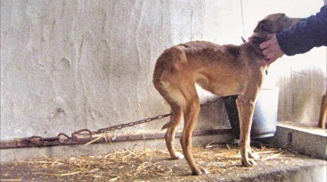 Núcleo especializado investigará crimes contra animais em Teresina, PI