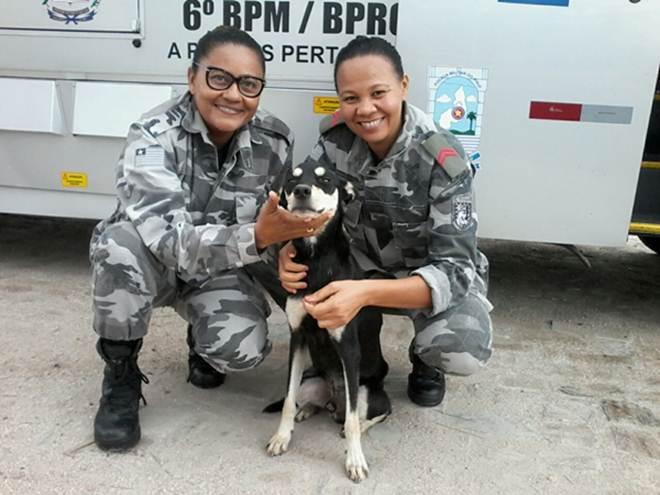 Em Teresina (PI), PMs acolhem cãozinho de rua que vagava perto de Unidade Móvel