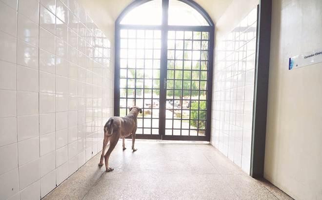 Sem ter como pagar gastos hospitalares, tutores abandonam animais no HVU