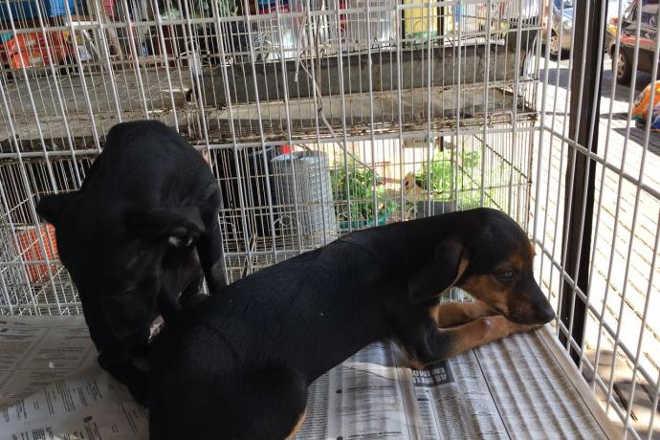 Trio abandona filhotes de cães na rua e revolta moradores em Apucarana, PR