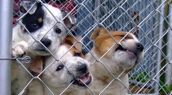 A Sociedade Protetora dos Animais está de mudança, e precisa de ajuda em Curitiba, PR