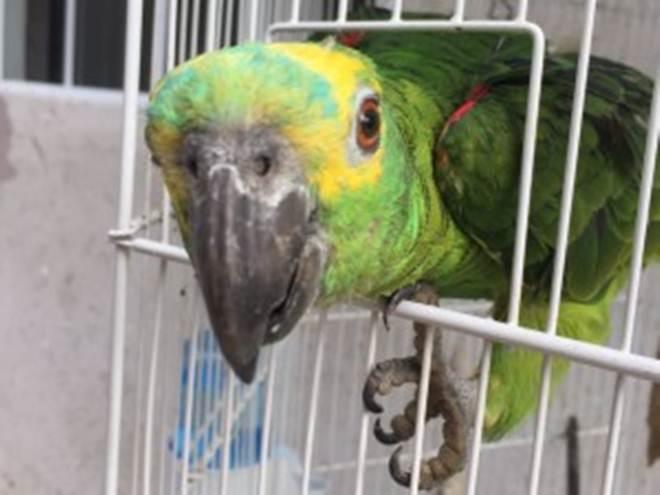 Instituto Ambiental do Paraná tem fila para adoção de animais silvestres
