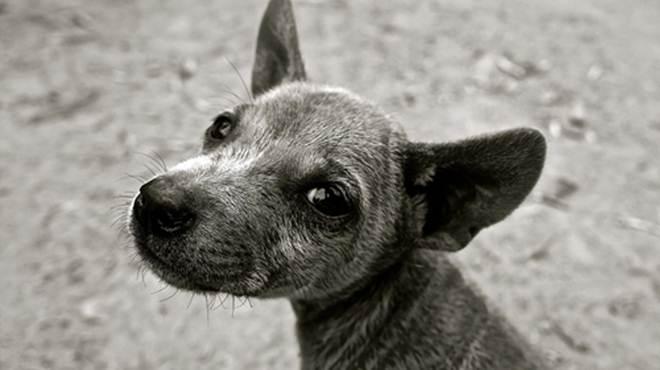 Jardim Alegre (PR) vive surto de cinomose e ONG reclama falta de recursos para cuidar dos cães