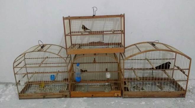 Operação da Polícia Ambiental resgata aves em cativeiro no Litoral do Paraná