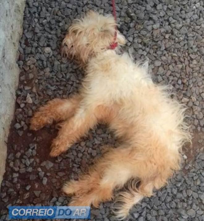 Polícia e ONG encontram cadela morta e outros dois cães feridos em residência, em Palotina, PR
