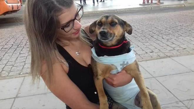 Ação solitária de protetora de animais em Ponta Grossa (PR) viraliza na internet