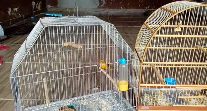 Dois moradores de Ponta Grossa (PR) são notificados por manter animais em cativeiro