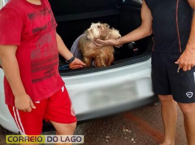 Homem é suspeito de abandonar cachorros em caixa de papelão amarrada com fitas em Santa Helena, PR