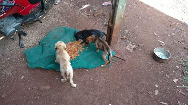 Tutores vão viajar e deixam animais sem comida em São João do Ivaí, PR; um cão morreu