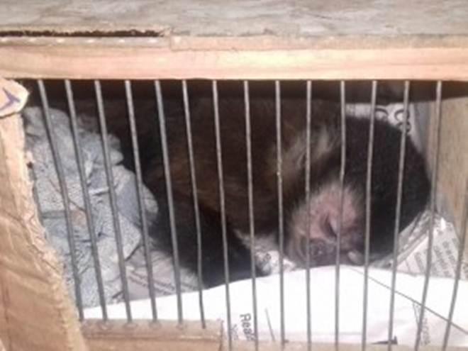 Quatro macacos-prego são resgatados em ônibus no Paraná