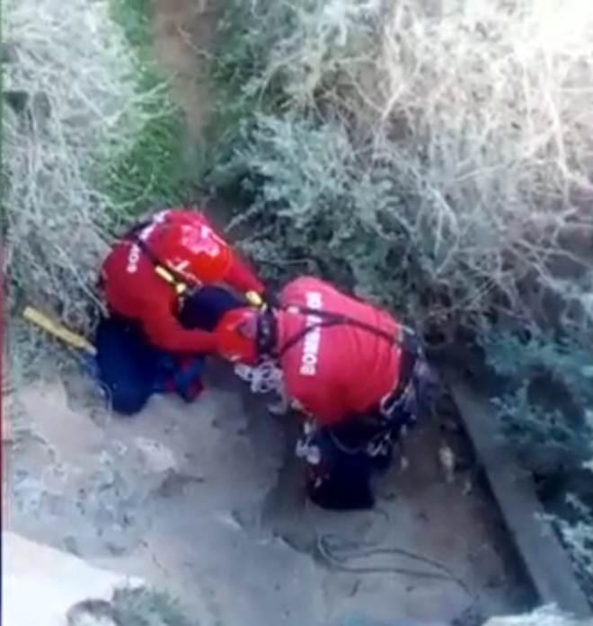 Dois cães salvos pelos bombeiros após queda em falésia, em Albufeira, Portugal