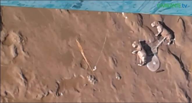 Oito cachorros mortos à beira Tejo em Alhandra, Portugal