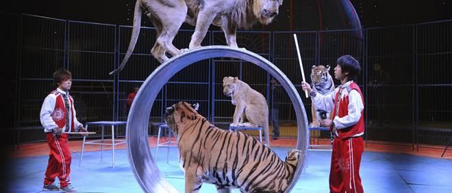Ativistas protestam contra maus-tratos dos animais nos circos em Lisboa, Portugal