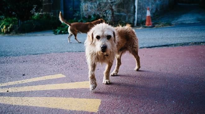 Cães mortos por envenenamento geram indignação em Santa Maria da Feira, Portugal