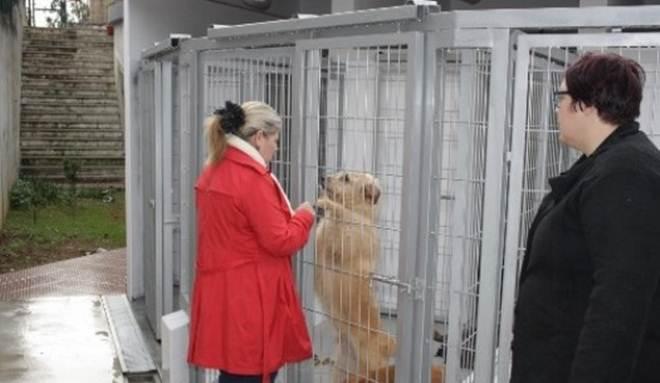 Portugal: Município de Tomar cria mais espaço no canil para salvar animais abandonados