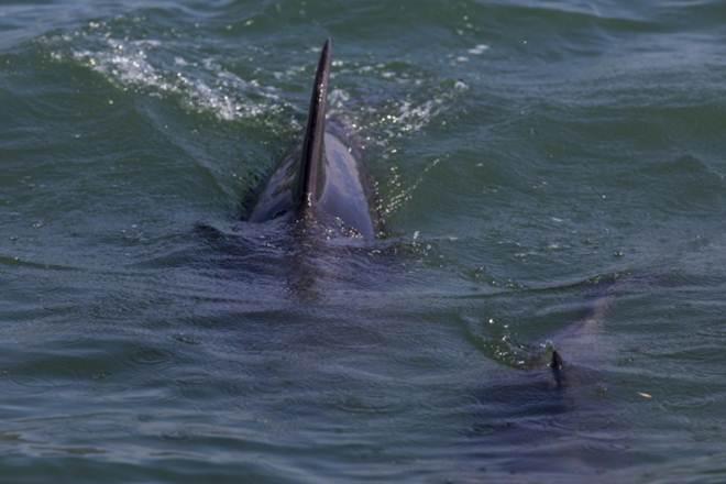 Cinco golfinhos deram à costa sem vida em Vila do Conde e Póvoa de Varzim, Portugal