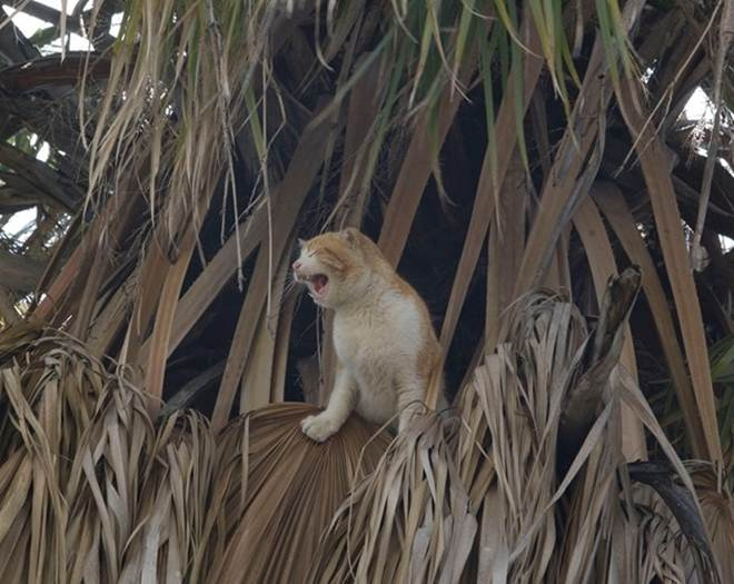 Oitenta animais salvos pelos bombeiros em Portimão, Portugal