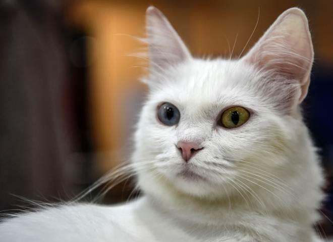 Portugal: Tribunais vão tratar animais de estimação cada vez mais como crianças