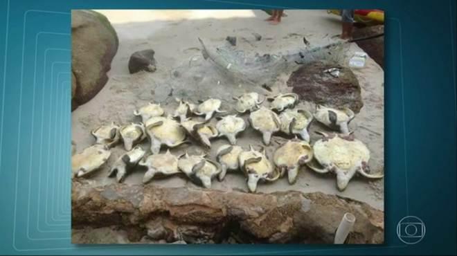 Bombeiros encontram 21 tartarugas mortas em Barra de Guaratiba, no Rio