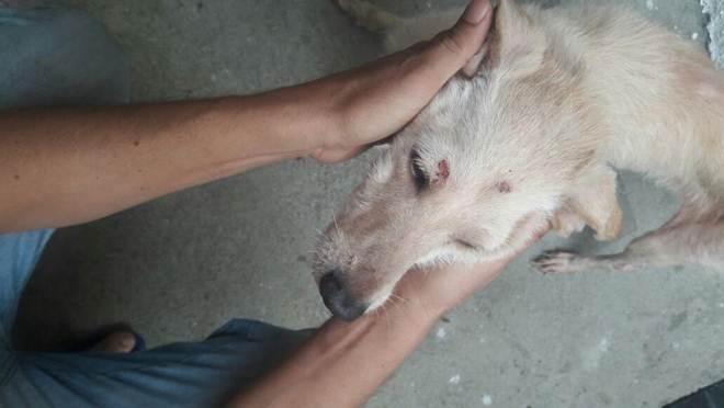 Policiais resgatam cadela vítima de maus-tratos em Vila Isabel, no Rio