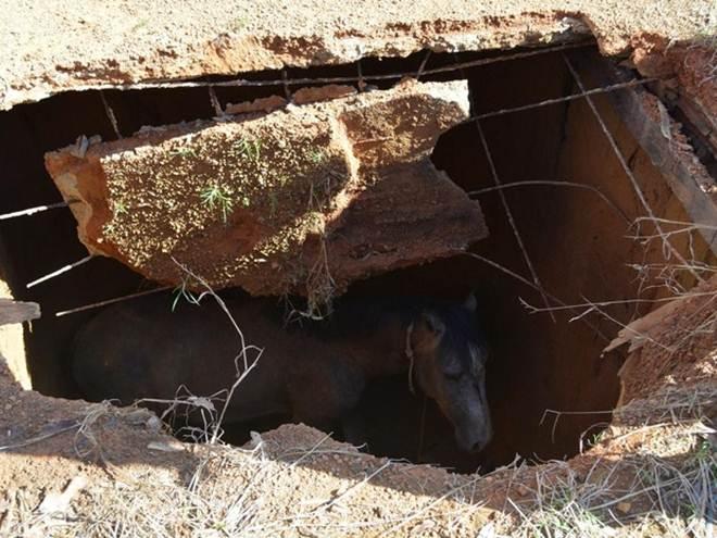 Cavalo é resgatado após cair em fossa de 5m de profundidade em Rondônia