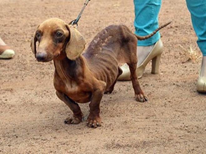 Equipes de jornalismo resgatam cão vítima de maus-tratos