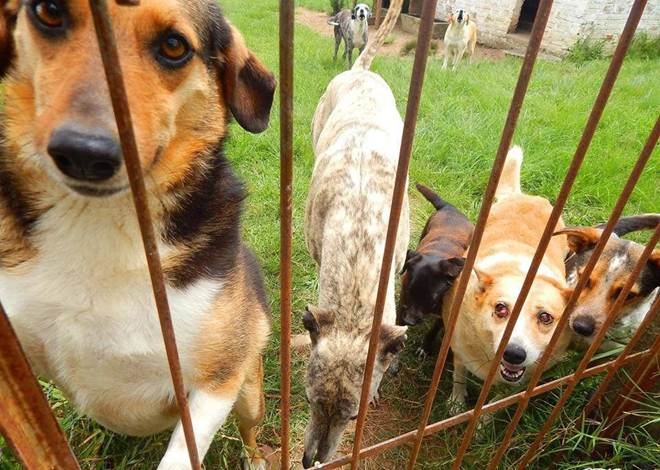 Núcleo de Proteção aos Animais de Bagé (RS) suspende atendimentos