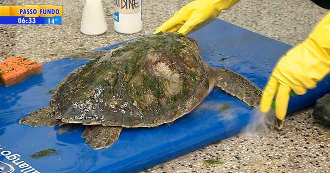 Tartaruga debilitada é resgatada no litoral norte do Rio Grande do Sul