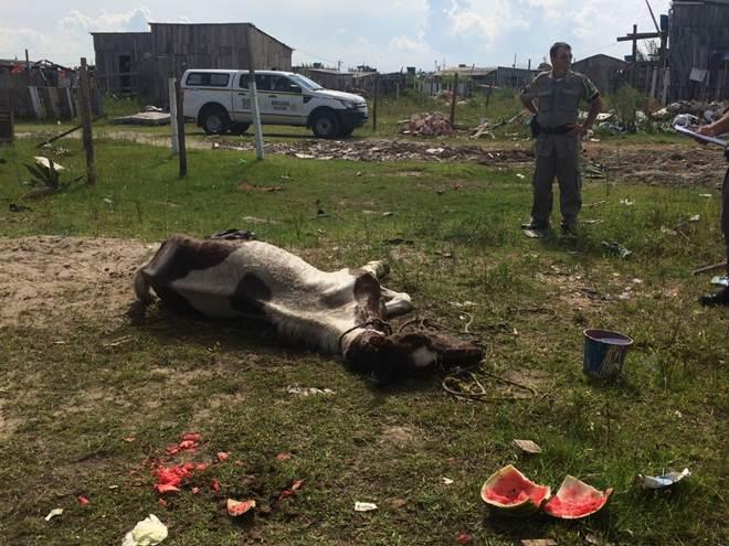 Vítima de maus-tratos, cavalo é eutanasiado em Osório, RS
