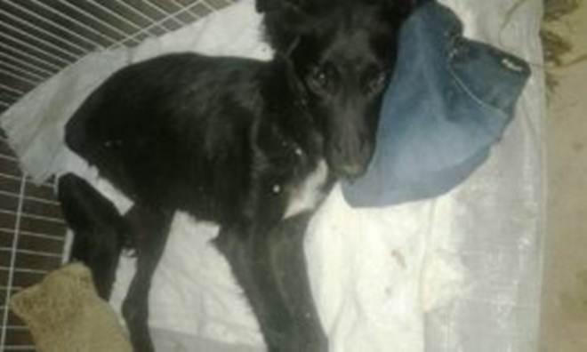 Cachorros morrem com suspeita de envenenamento no Bairro Hípica, em São Sepé, RS