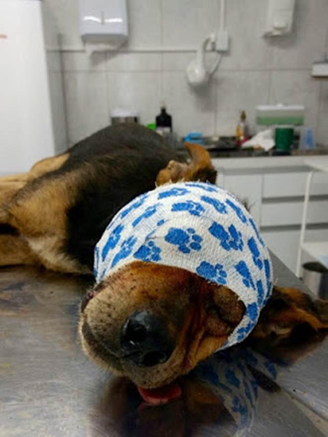 Crueldade: Cachorro é espancado, jogado em vala e fica cego em São Sebastião do Caí, RS