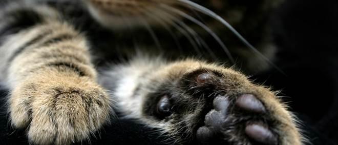 Há um assassino de gatos à solta no Reino Unido
