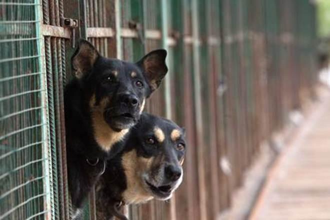 Voluntários em Moscou salvam animais de rua de inverno congelante