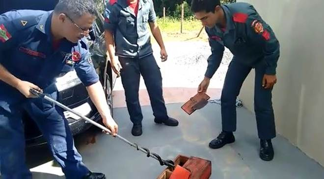 Bombeiros militares capturam duas cobras em Barra Velha, SC