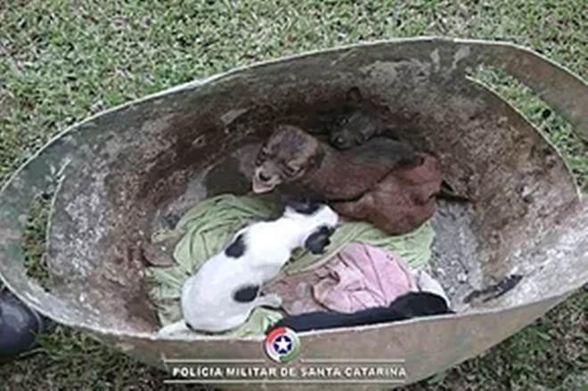 Cachorros abandonados são resgatados por policial em Canoinhas, SC