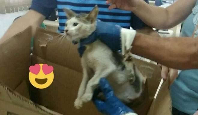 Gato encontrado dentro de caminhão do lixo em Florianópolis (SC) está disponível para adoção