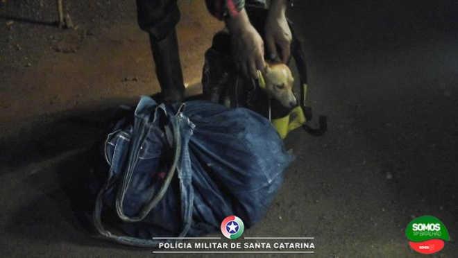 PM aborda motociclista que levava cachorros dentro de mochilas em Guaramirim, SC
