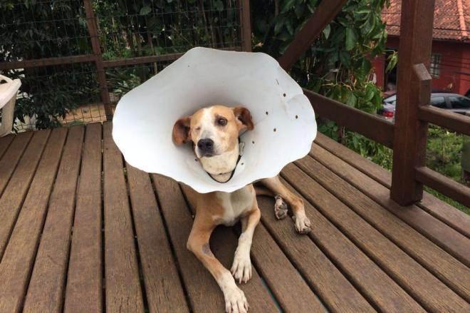 Cão Pirata se recupera e é adotado por moradora do Porto da Lagoa, em Florianópolis, SC