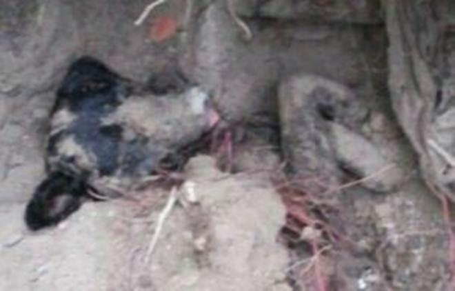 Cachorro enterrado é resgatado na Praia do Iró, em Laguna, SC