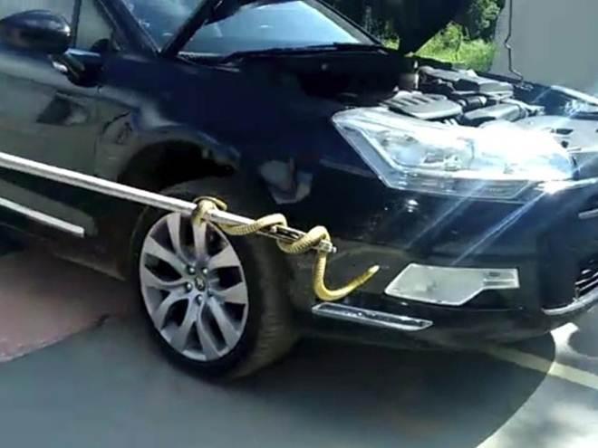 Cobra é encontrada no motor de carro em Barra Velha, Norte de SC