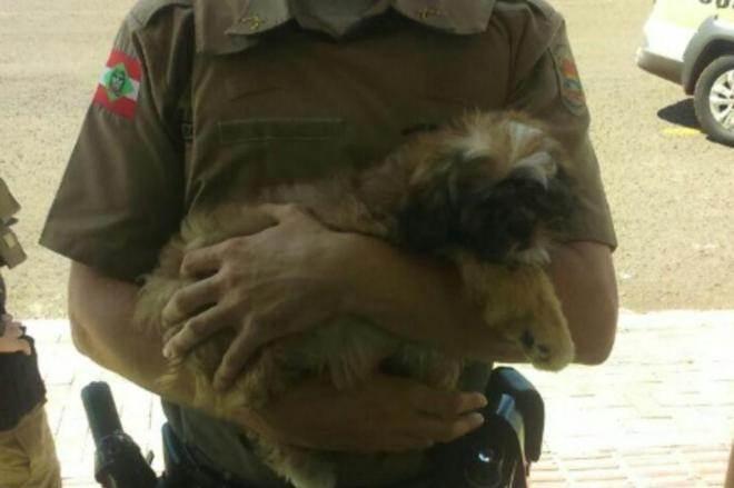 PMs resgatam cachorro trancado dentro de carro em Pinhalzinho, SC