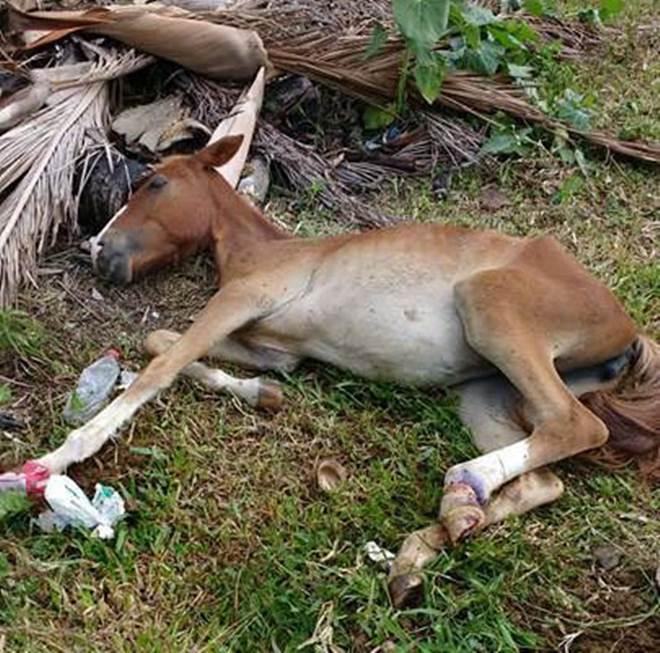 Prefeitura de Porto Belo (SC) realiza atendimento em possível crime de maus-tratos a cavalo