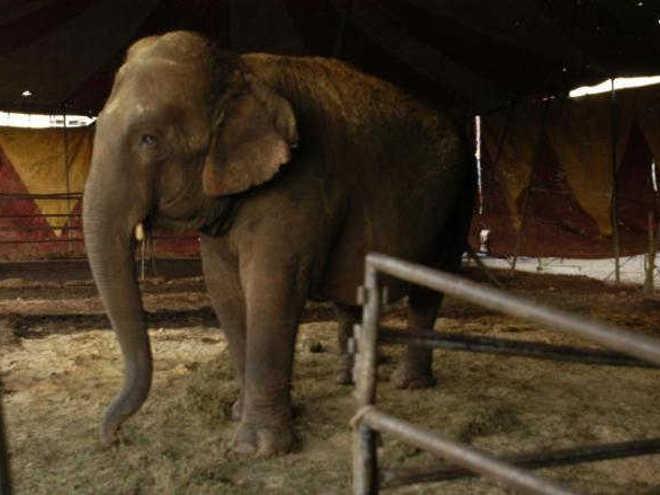 Lei estadual proíbe uso de animais em espetáculos de circo em Santa Catarina