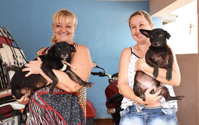 Número de animais abandonados cresce 20% no período de férias em Araçatuba, SP