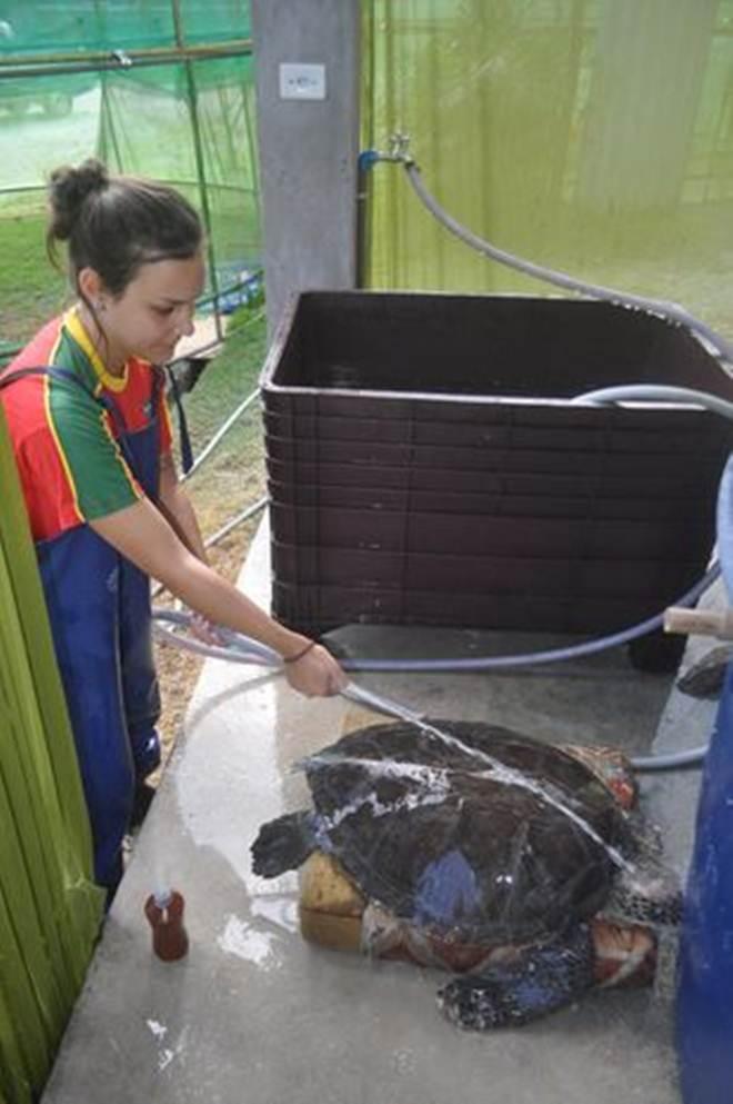 Balanço do Gremar aponta 350 animais resgatados com vida em 2016 na região da Baixada Santista