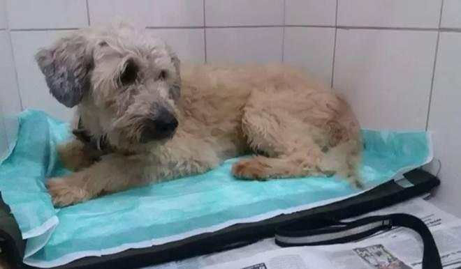 Fogos matam dois cães e deixam dezenas perdidos em Campinas, SP